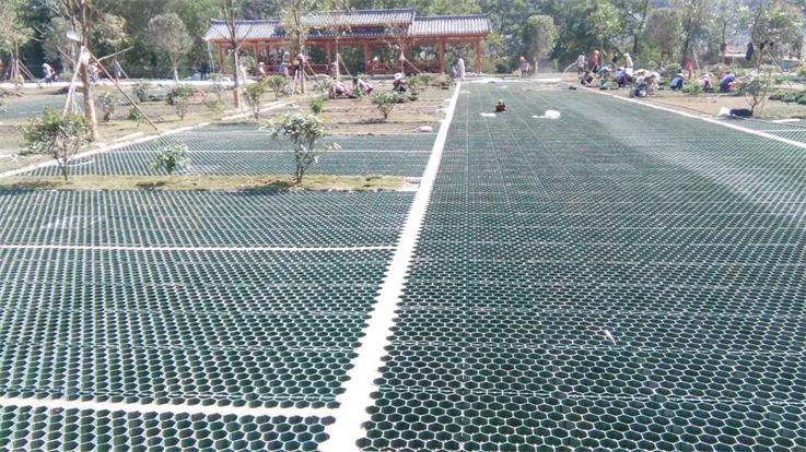 小区广场绿化工程